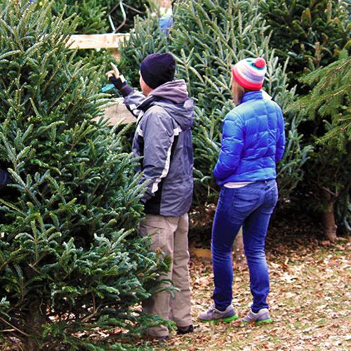 The Real Christmas Tree Farm: Farm Fresh Pre-cut Christmas Trees At Belltown Hill