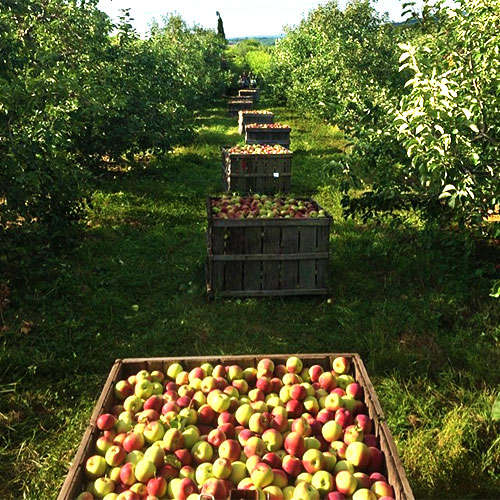 Belltown Hill Orchards